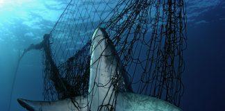 Umweltschutz-Projekte wollen auf Misstände des menschlichen Umgangs mit der Natur hinweisen. Quelle: WWF