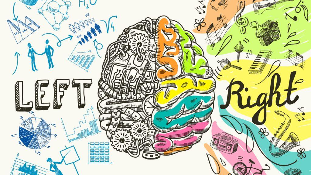 Das Gehirn spielt eine ganz zentrale Rolle in unseren täglichen Abläufen. Bildquelle: Shutterstock.com