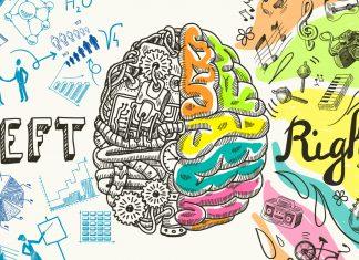 Das Gehirn ist das aktivste Organ im ganzen Körper. Quelle: Shutterstock.com