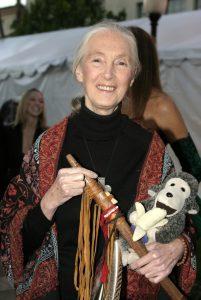 Dr. Jane Goodall auf einer ihrer unzähligen Vortragsreisen. Bildquelle: Shutterstock.com