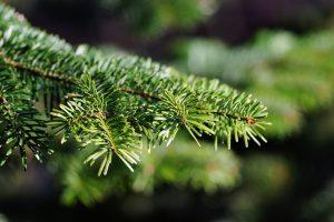 Später fing man an den Adventskranz mit Tannenzweigen zu schmücken. - Quelle: Pixabay.de