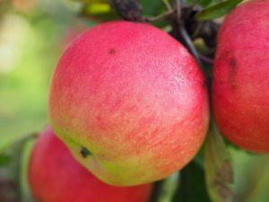 Heute kann man Obst und Gemüse auch außerhalb der Saison problemlos im Supermarkt kaufen. Quelle: Pixabay.com