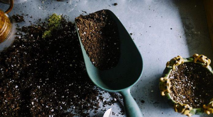 Ab wann geht eigentlich wieder so richtig los im eigenen Garten? Quelle: Pixabay.de