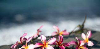 Der Hula ist der traditionelle Tanz auf Hawaii. Quelle: Shutterstock.com