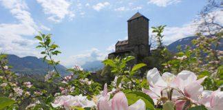 Apfelblüte im Meraner Land. Bildquelle: Marketinggesellschaft Meran