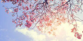 Im Frühling finden sich auch in der Natur viele Töne in Pastell. Quelle: Shutterstock.com