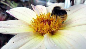 Das Bienensterben hat auch für den Menschen verheerende Auswirkungen. Quelle: pixabay.de