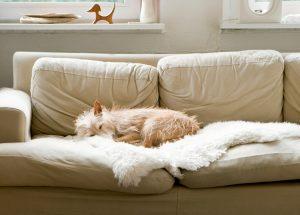 Ob groß oder klein, der Hund erfreut sich als Familienmitglied großer Beliebtheit. Quelle: binebellmann.de