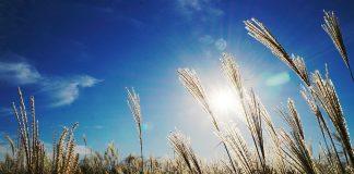 Licht hat einen wesentlichen Einfluss auf unsere Stimmung und unser Wohlbefinden. Quelle: Pixabay.de