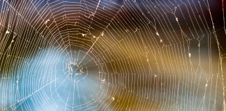 Spinne. Quelle: pixabay.com