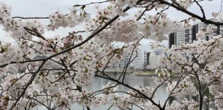 Gedenken an die Opfer von Hiroshima. Quelle: pixabay.de