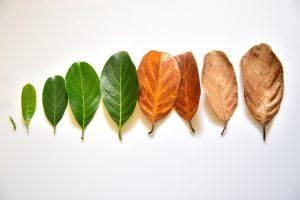 Das Leben ist vergänglich. Und wir sollten akzeptieren, das der Tod zum Leben dazu gehört. Bildquelle: Shutterstock.com