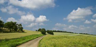 Der Hellweg galt als sichere Handelroute, da er, frei von bewuchs, gut einzusehen war. Bildquelle: pixabay.de
