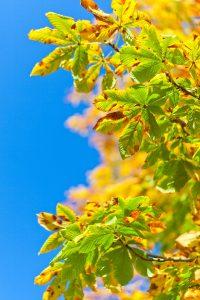 Am Tag des Baumes am 25. April werden Deutschland weit neue Bäume gepflanzt. Quelle: pixabay.de