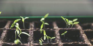 Ein grüner Trend macht sich in Deutschland breit: Urban Gardening. Bildquelle: pixabay.de