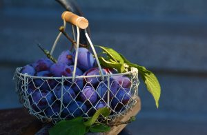 Frisch aus dem Garten schmecken Pflaumen natürlich am besten! Quelle: pixabay.de