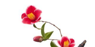 Ikebana – so nennt man die japanische Kunst des Blumen arrangierens. Bildquelle: shutterstock.com