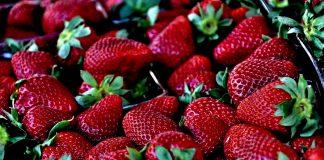 Von Mai bis Juni kann man die Erdbeere direkt frisch vom Feld essen. Quelle: pixabay.de