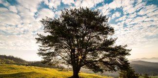 Der Tag des Baumes ist zeitgleich auch ein wichtiger Tag des Naturschutzes. Quelle: pixabay.de