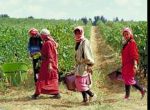 Insgesamt 42 Weingüter gibt es mittlerweile im Libanon. Bildquelle: 59plus Redaktion
