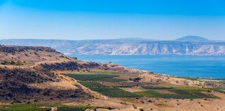 Der Weinanbau hat in Israel eine lange Tradition. Bildquelle: shutterstock.com