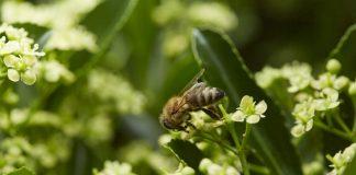 Stadtimker Dr. BEE: Die fleißigen Bienen in Düsseldorf. Bildquelle: Bine Bellmann