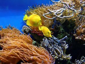 Wunderschöne Unterwasserwelt, die es verdient hat geschützt zu werden! Bildquelle: Pixabay.de