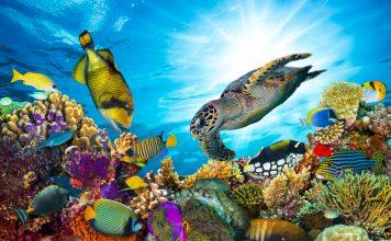 Was sind denn Korallen nun eigentlich genau? Bildquelle: shutterstock.com