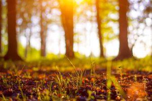 Die Eifel und damit der Rückzug in die Natur hat Katharina Martini geholfen ins Leben zurück zu finden. Bildquelle: © Shutterstock.com