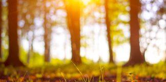 Die letzte Ruhe finden - für viele inzwischen auf einem Waldfriedhof vorstellbar. Bildquelle: shutterstock.com