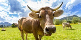Die solidarische Landwirtschaft will dabei helfen Menschen mit regionalen Produkten zu fairen Konditionen versorgen. Bildquelle: pixabay.de
