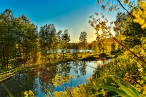 Für Naturfreunde hat Estland neben wunderschöneen Nationalparks auch seltene Tierarten zu bieten. Bildquelle: shutterstock.com