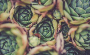Artischocken - unser Gemüse des Monats Juni. Bildquelle: Pixabay.de