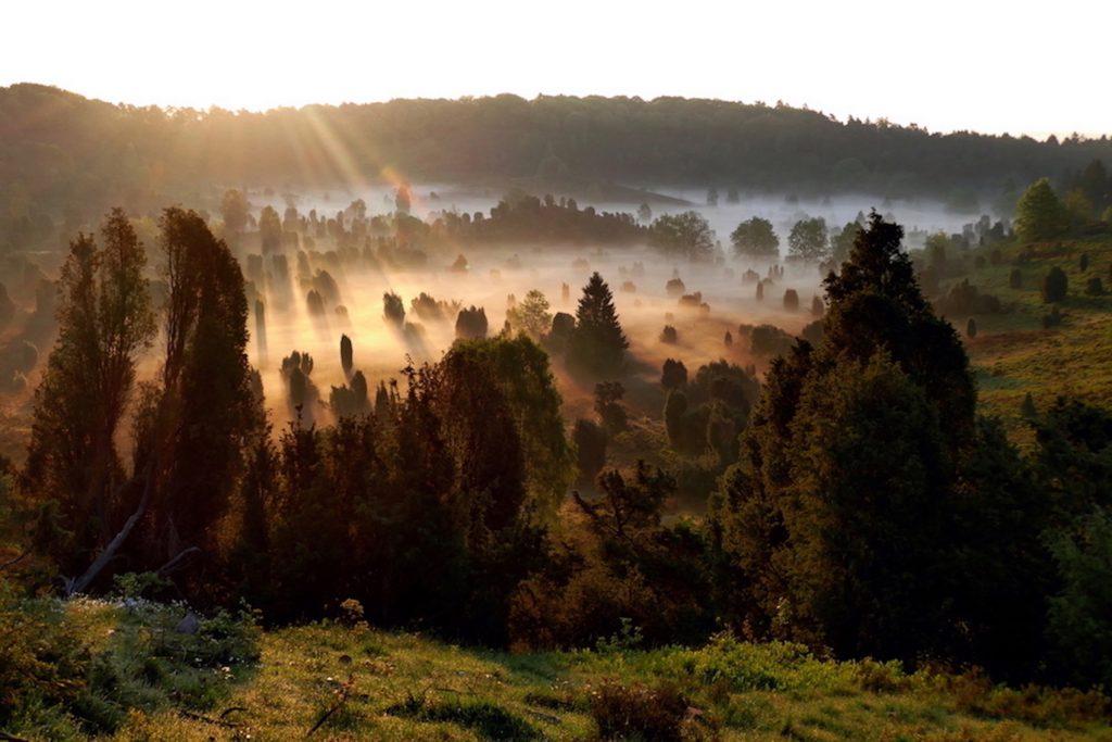 Die Heide. Totengrund bei Sonnenaufgang. Bildquelle: Christiane Feill