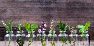 Retterspitz ist eine Mischung von verschiendenen Kräutern und ätherischen Ölen. Bildquelle: shutterstock.com