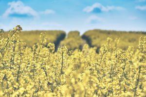 Die Landwirtschaft trägt maßgeblich zum Insektensterben bei. Bildquelle: Pixabay.de