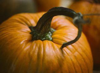 Der Kürbis ist das klassische Gemüse das den beginnenden Herbst ankündigt. Bildquelle: Pixabay.de