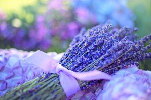 Der Duft von Lavendel wirkt in der Regel beruhigend. Bildquelle: Pixabay.de