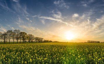 Natur pur - Mecklenburg Vorpommern ist abwechslungsreich und vielseitig. Bildquelle: Pixabay.de