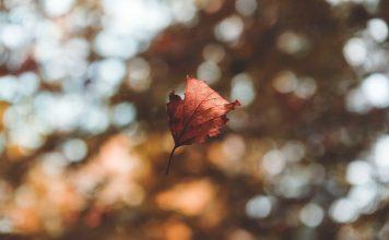 Wer kennt ihn nicht, den Herbstblues. Bildquelle: Photo by Hedi Alija on Unsplash