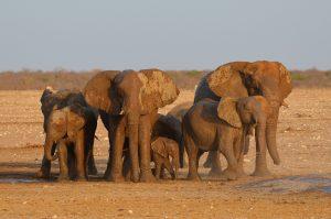 """Mit etwas Glück sehen Sie im Etosha Nationalpark die """"Big Five"""". Bildquelle: Pixabay.de"""