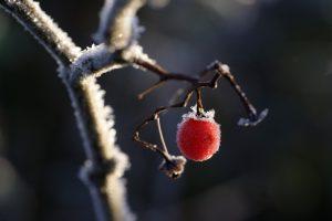 Gönnen Sie den Pflanzen einen entspannten Winterschlaf. Bildquelle: Pixabay.de