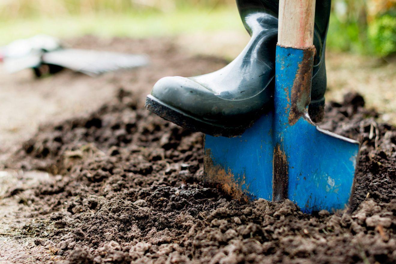 Unsere Garten- oder Balkonpflanzen wollen winterfest gemacht werden. Bildquelle: shutterstock.com