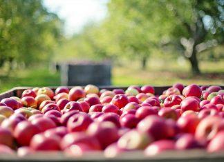 Saisonal essen ist vielleicht ein wenig aufwendiger, aber dafür umweltverträglicher und durchaus gesund. Bildquelle: Pixabay.de