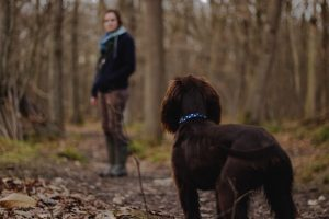 Ob mit oder ohne Hund - Marlis freut sich auf nette Begleitung auf ihren Wandertouren rund um Leipzig. Bildquelle: Matt Unger on Unsplash.com