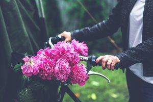 Pfingstrosen sind wunderschön und sehr pflegeleicht. Bildquelle: Pixabay.de