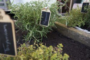 Auch eigene gezogene Pflanzen sind z. B. in einem Hochbeet kein Problem im Alter. Bildquelle: Pixabay.de