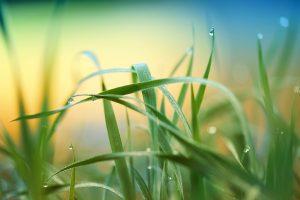 Variieren Sie mit der Schnittlänge des Rasens. Nicht immer muss es ein Wimbledon Rasen sein, auch eine bunte Wiese kann ganz wunderbar aussehen. Bildquelle: Pixabay.de
