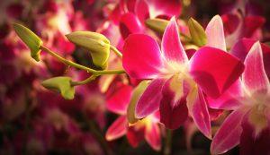 Ihre Gartenreise sollte Sie unbedingt in die größte Orchideensammlung führen. Bildquelle: Pixabay.de