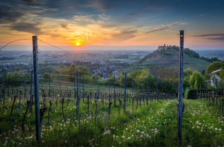 Staufen im Breisgau ist unbedingt einen Besuch wert. Idyllisch und malerisch liegt dieses kleine Städtchen inmitten der Weinberge. Bildquelle: Pixabay.de